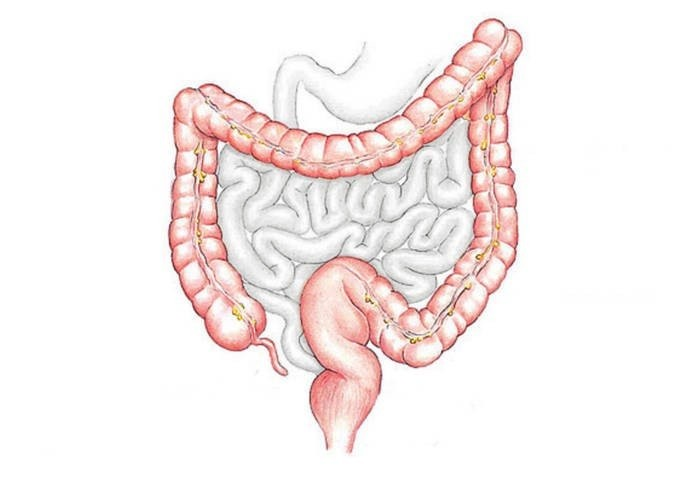 Intestino Crasso o Colon e Rimedi Naturali